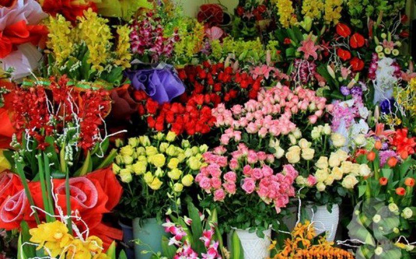 2 doanh hoa cây cảnh chưng tết